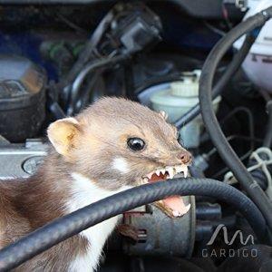 Marderschreck Auto