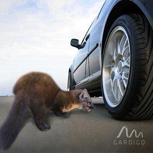 Marderkot beim Auto