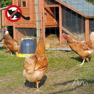 Marderschreck Hühnerstall