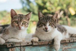 Ist in Deutschland das Benutzen einer Katzenfalle erlaubt