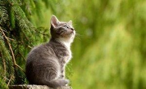 Katzenfalle kaufen