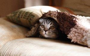 Wie funktioniert eine Katzenfalle