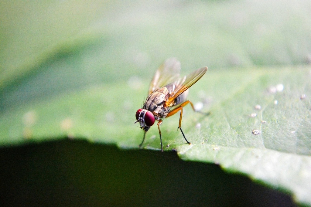 Fruchtfliegen bekämpfen Töten oder lebendig fangen